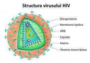 Internet HIV, varianta online, inofensiva, a virusului