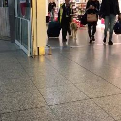 Cati & Guide Dog Klint have arrived in the UK for ...